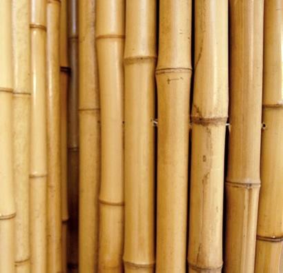 Vendita bamboo for Vendita bambu